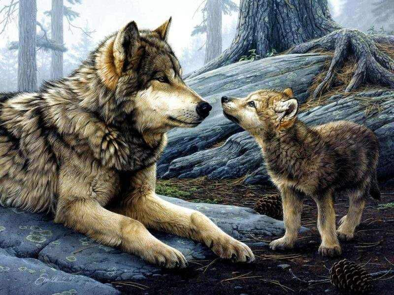 Loup Et Louveteau
